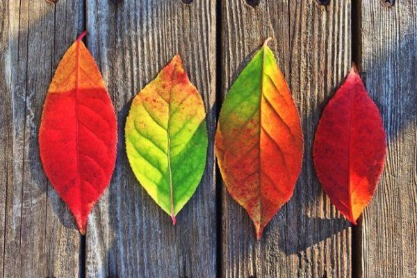 Zwolnij i poczuj siebie! 9 PAŹDZIERNIKA rusza kurs MINDFULNESS – trening redukcji stresu