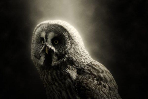 Spotkanie z Wewnętrzną Mądrością – artykuł Ewa Piwnicka